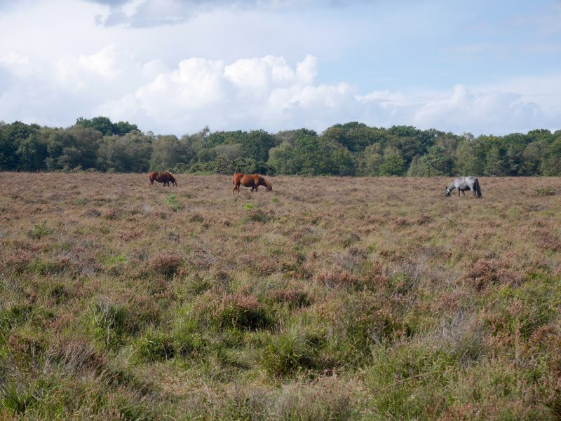 Cycling to and through the New Forest on Sustrans NCN route 2